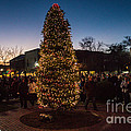 A Southern Pines Christmas 2 by George DeLisle