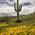 A Southwestern Style Spring by Saija  Lehtonen