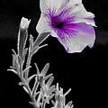 A Splash Of Purple by Laura Corebello