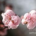 A Spring Dream by Joy Watson