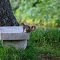 A Squirrel's Day Out by Maria Urso