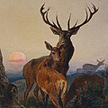 A Stag With Deer In A Wooded Landscape At Sunset by Charles Jones