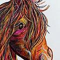 A Stick Horse Named Amber by Eloise Schneider