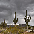 A Storm In The Sonoran Desert by Vivian Christopher