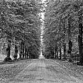 A Straightforward Path by Nancy De Flon