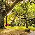 A Stroll In City Park by Steve Harrington