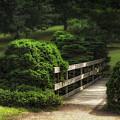 A Stroll Through The Park by Tom Mc Nemar