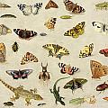 A Study Of Insects by Jan Van Kessel