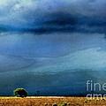 A Summer Rain Wc by Ken Williams