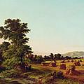 A Surrey Cornfield by Walter Williams