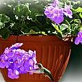 A Taste Of Geraniums by Barbara S Nickerson