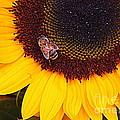 A Taste Of Sunshine by Dora Sofia Caputo Photographic Design and Fine Art