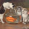 A Tempting Treat by Wilhelm Schwar