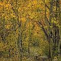 A Teton Autumn by Tom Fretz