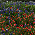 A Texas Roadside by Susan Rovira