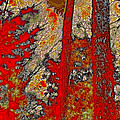 A Touch Of Autumn Abstract Vi by David Patterson
