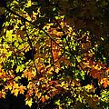 A Touch Of Fall by Gene Tatroe