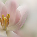 A Touch Of Pink by Annie Snel