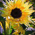 A Touch Of Sunflower by Athena Mckinzie