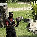 A Trainer And A Large Bird Of Prey At A Show Inside The Jurong Bird Park by Ashish Agarwal