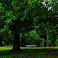 A Tree And A Bench by Jeff Swan