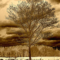 A Tree At Appleton by David Stone