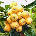 A Tree Full Of Ripe Loquats by Jeelan Clark