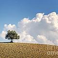 A Tree by Giuliano Iunco