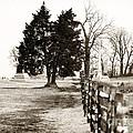 A Tree Grows In Gettysburg by John Rizzuto