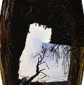 A Tree In A Square Abstract by Jeff Swan