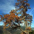 A Tree In Arcadia - Greece by Constantinos Iliopoulos