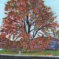 A Tree In Sherborn by Cliff Wilson