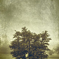 A Tree In The Fog 2 by Scott Norris