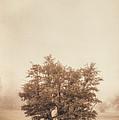 A Tree In The Fog by Scott Norris