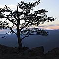 A Tree Of Mountains by Kari Watson