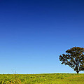 A Tree Stands Alone by Karol Livote