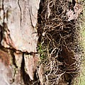 A Treetrunk Abstract by Maria Urso