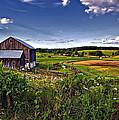 A Verdant Land II by Steve Harrington