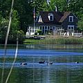 A View Of Some Ducks Enjoying Round Pond At The United States Military Academy by James Connor
