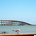 A View Of The Queen Isabella Causeway by Pat McGrath Avery