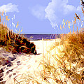 A View Through The Dunes To The Ocean by Elaine Plesser