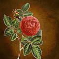 A Vintage Rose Romance L by Sheila Savage