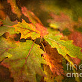 A Vision Of Fall by Venetta Archer