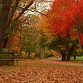 A Walk In Autumn - Holmdel Park by Angie Tirado