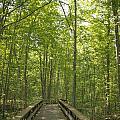 A Walk In Nature.  by Terri  Rilling