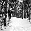 A Walk In Snow by Joe Faherty
