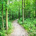 A Walk In The Woods by Grace Grogan