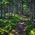 A Walk In The Woods by John Haldane