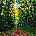 A Walk In The Woods  by John  Hannan