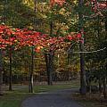 A Walk Through Fancher Davidge Park by Chet B Simpson